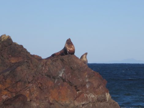 Kyla - Cape Scott Hike - Sea Lions